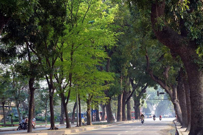 Ảnh đẹp một góc phố xanh Hà Nội