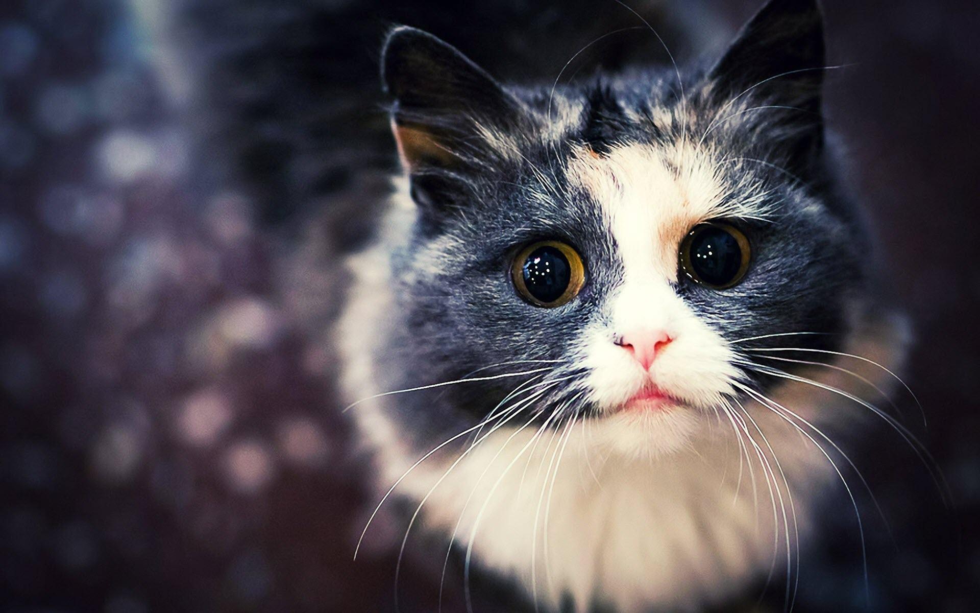 Hình nền chú mèo cho máy tính
