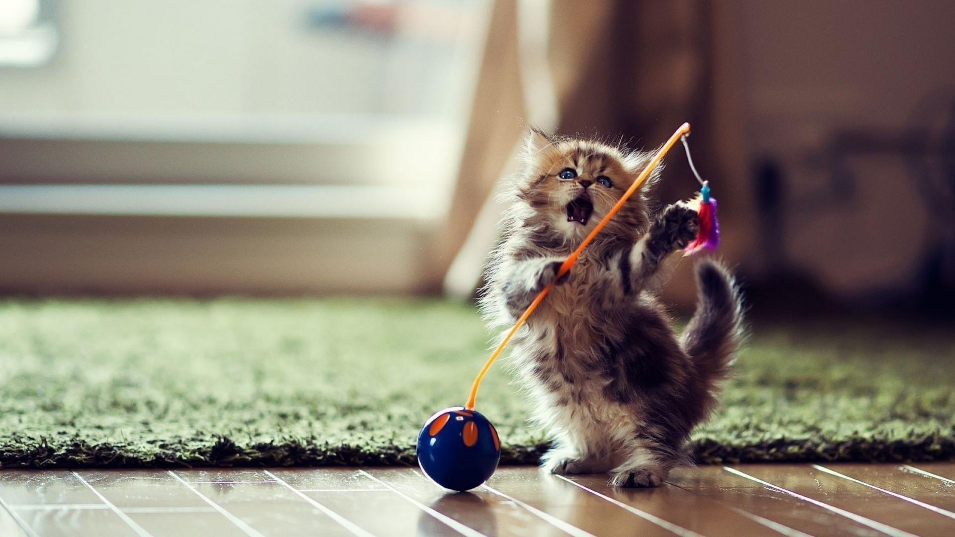 Hình nền chú mèo chơi đùa ngộ nghĩnh