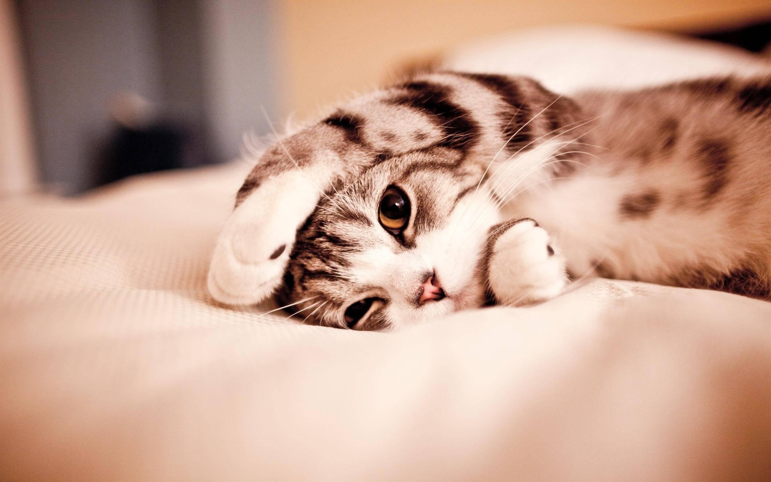Hình nền chú mèo con dễ thương cho máy tính (2)