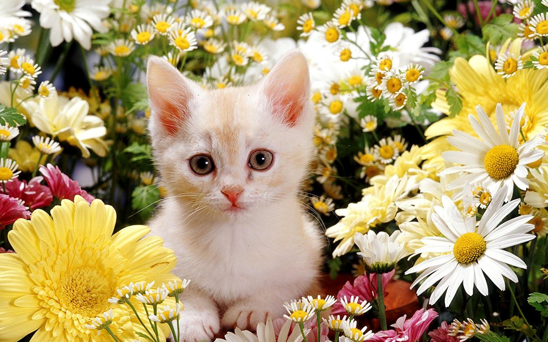 Hình nền chú mèo con giữa những bông hoa đẹp