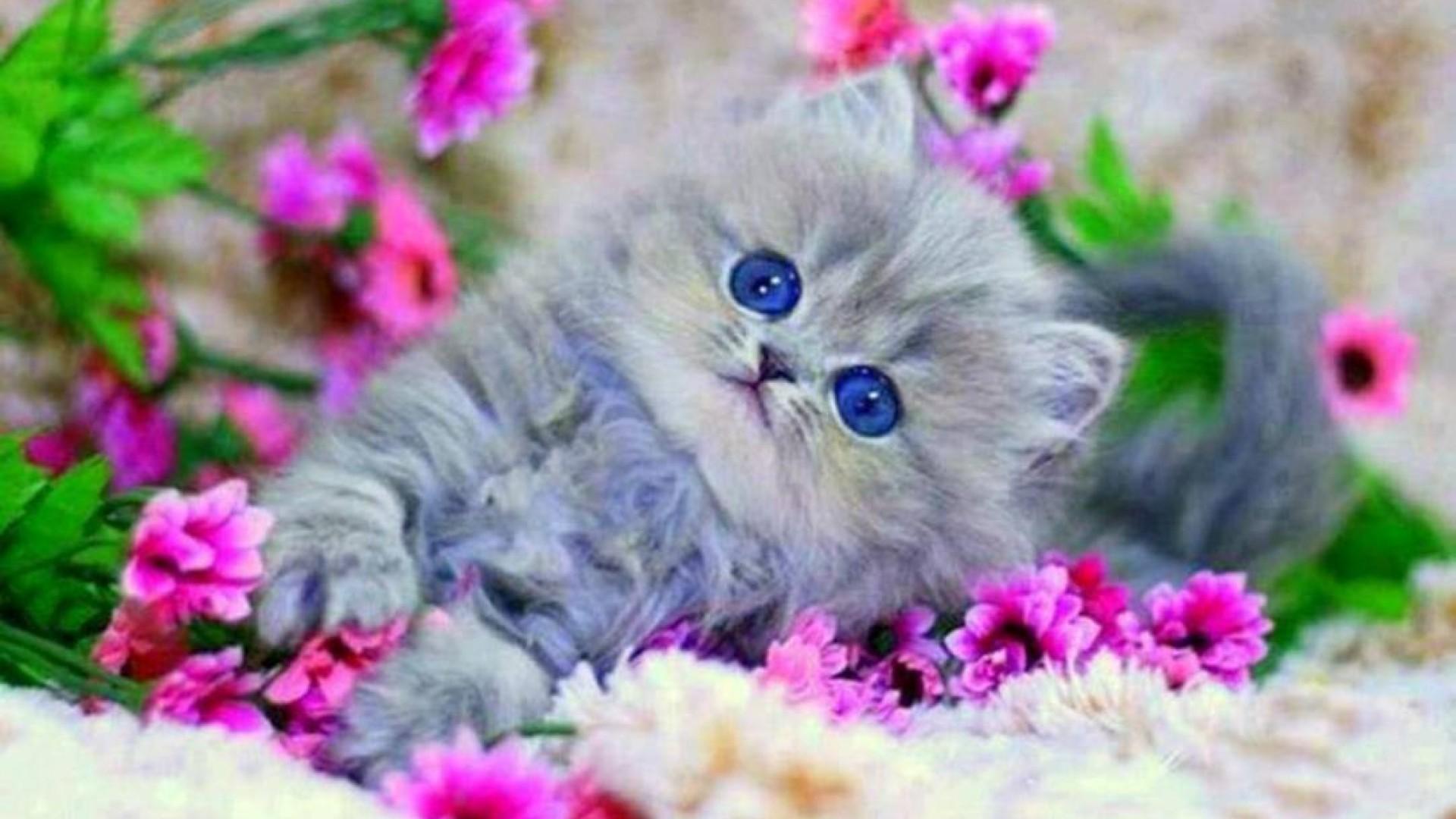 Hình nền chú mèo đáng yêu nhất