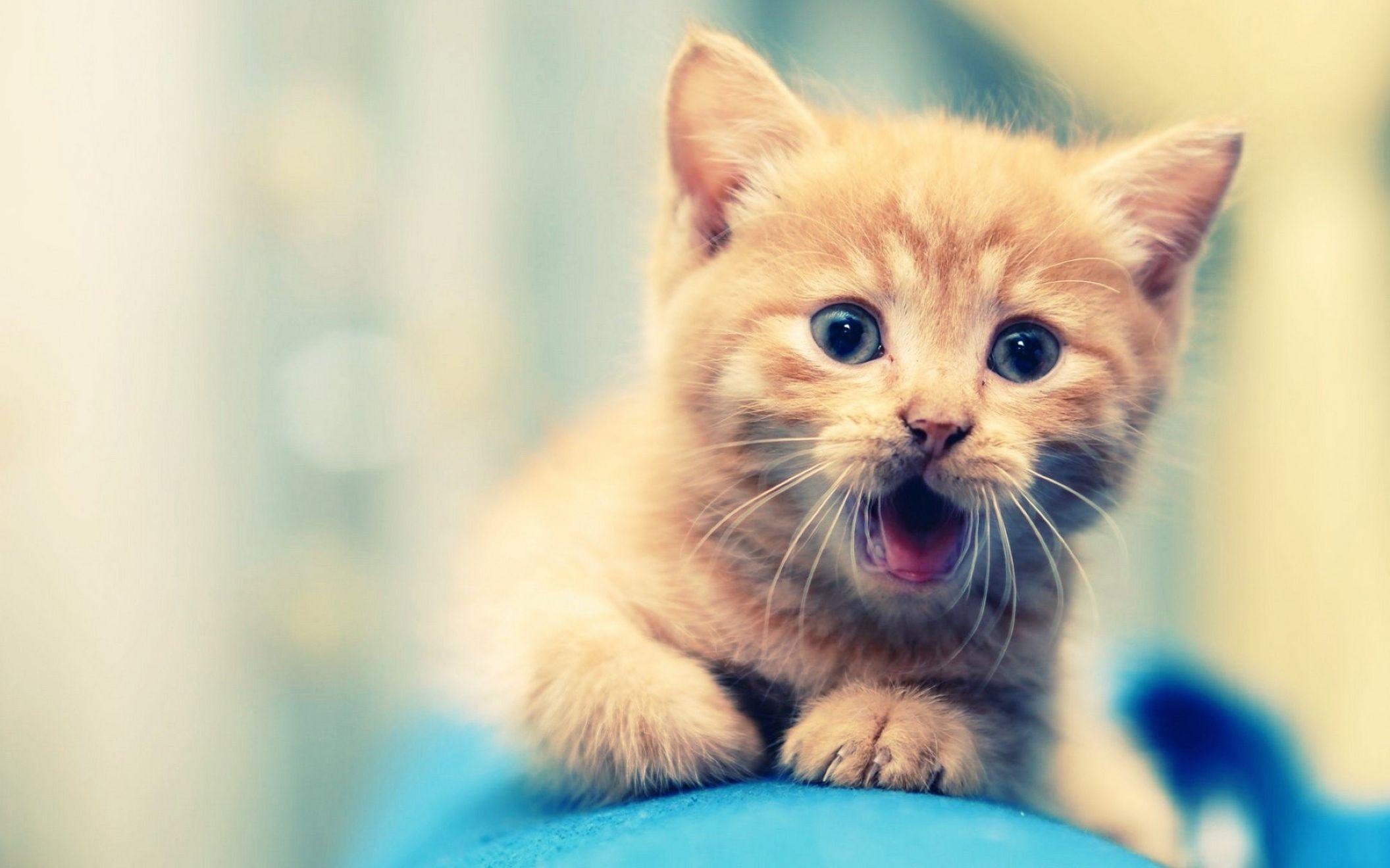 Hình nền chú mèo dễ thương (2)