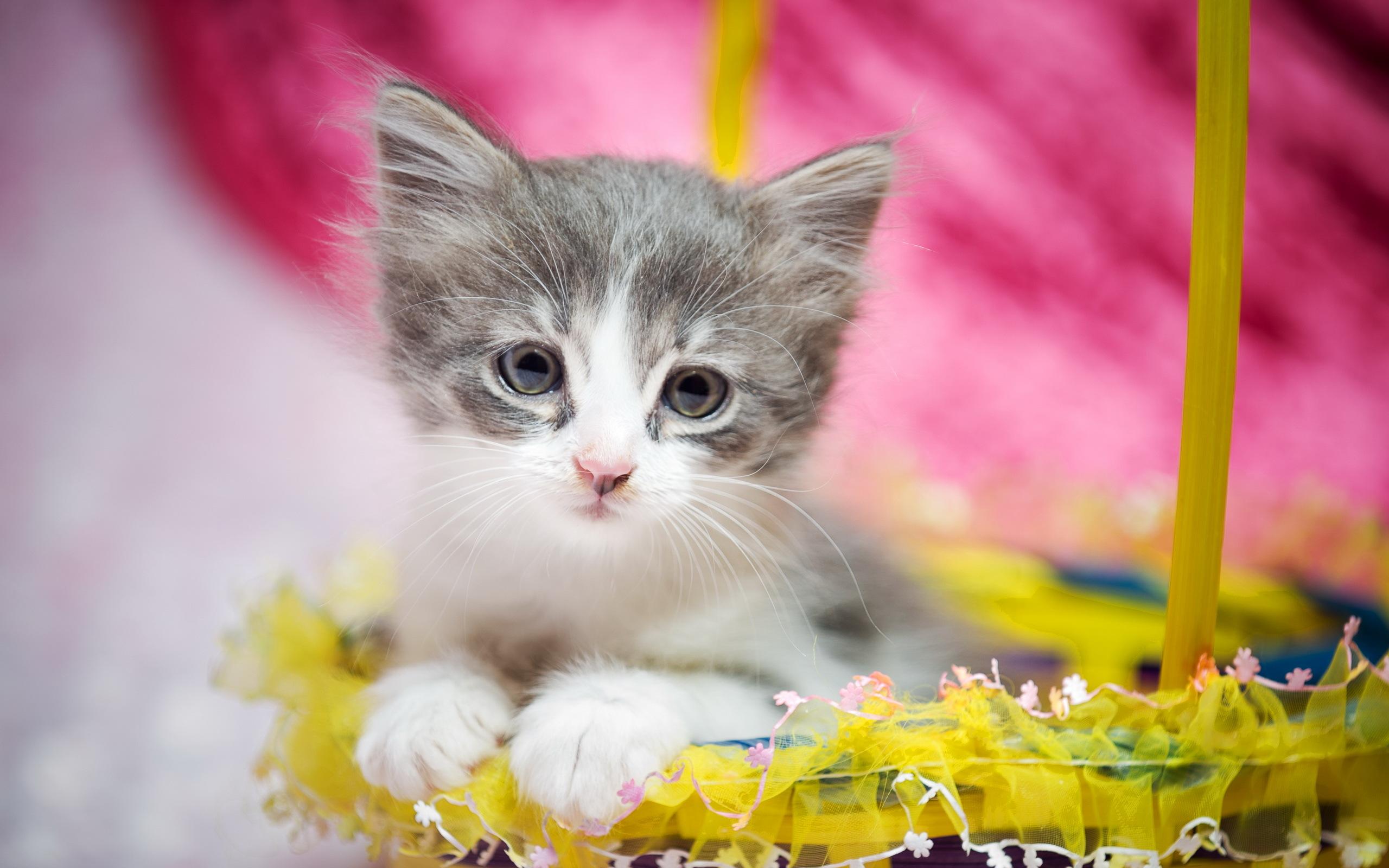 Hình nền chú mèo dễ thương