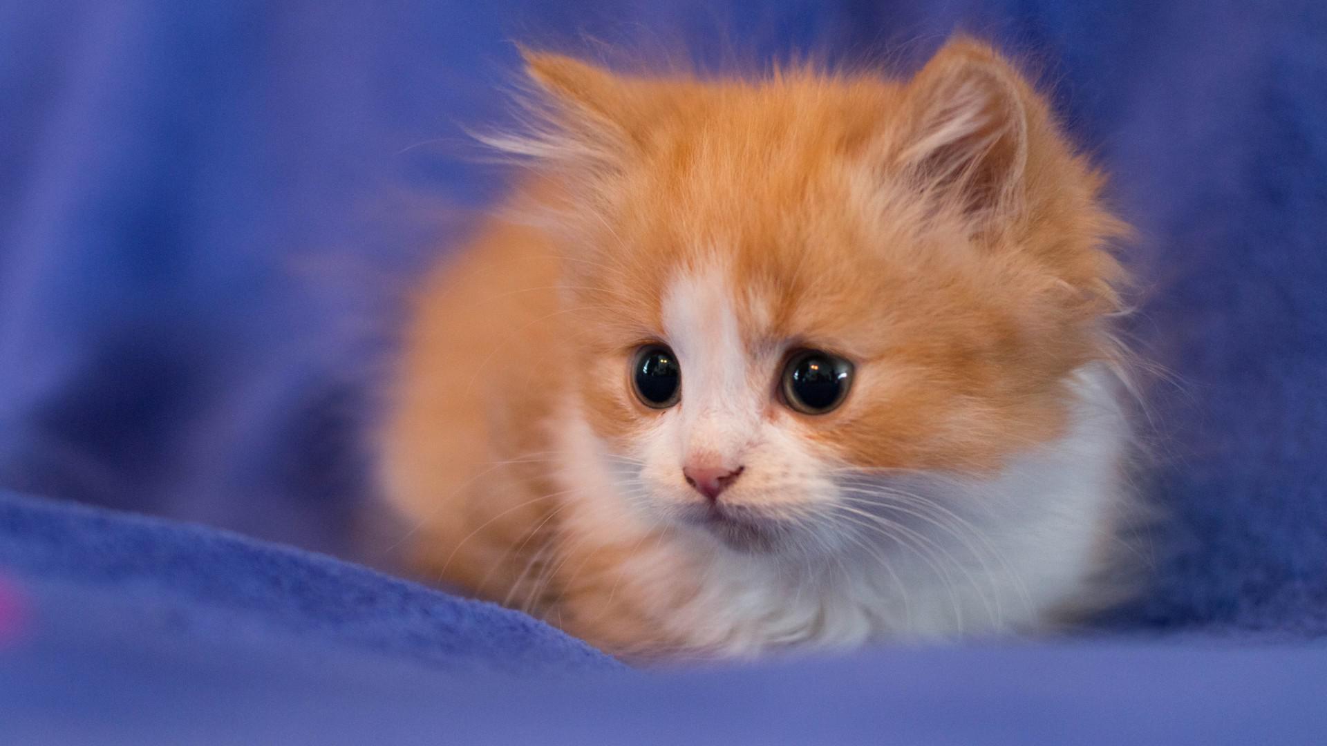 Hình nền chú mèo đẹp