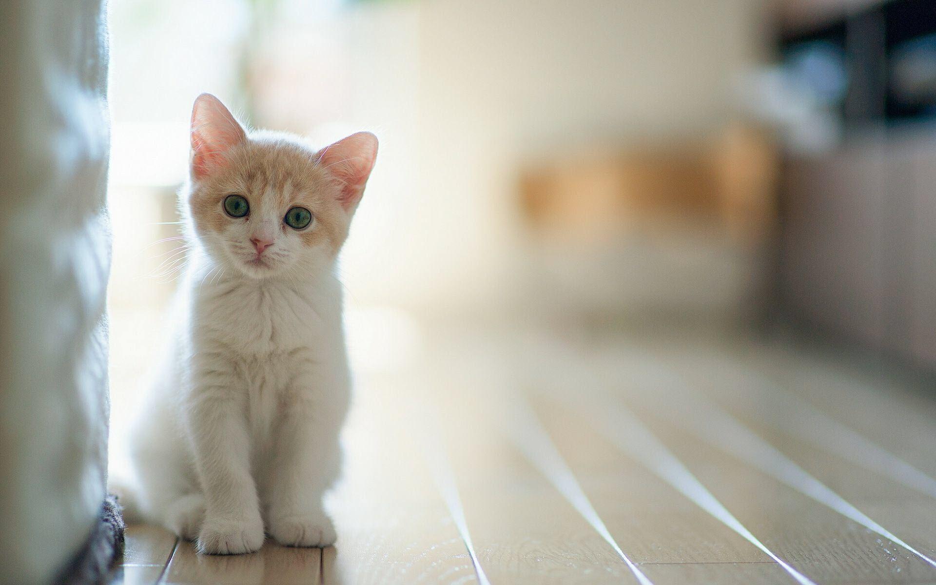 Hình nền chú mèo ngộ nghĩnh đáng yêu