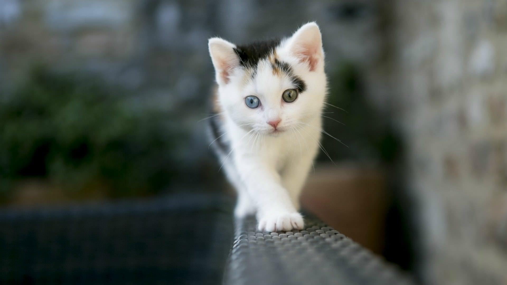 Hình nền chú mèo trên lan can dễ thương