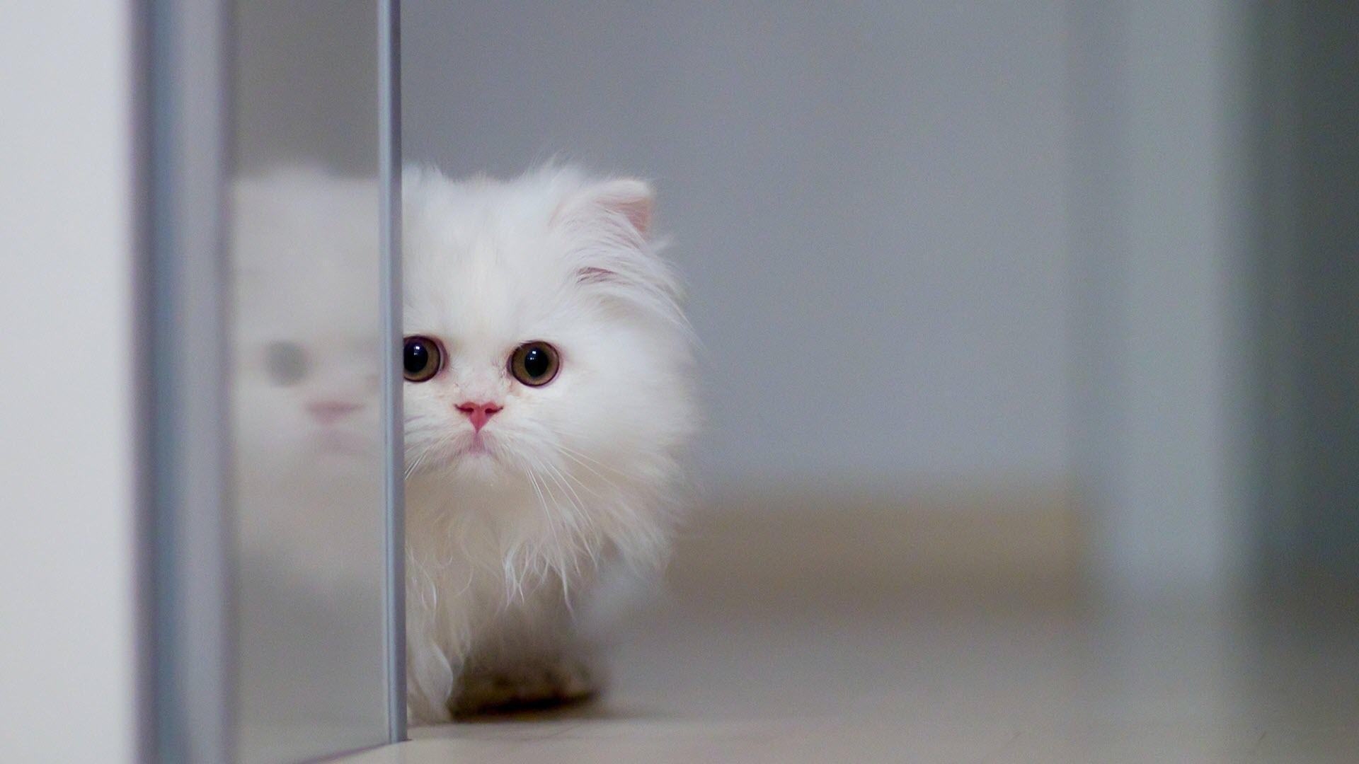 Hình nền con mèo