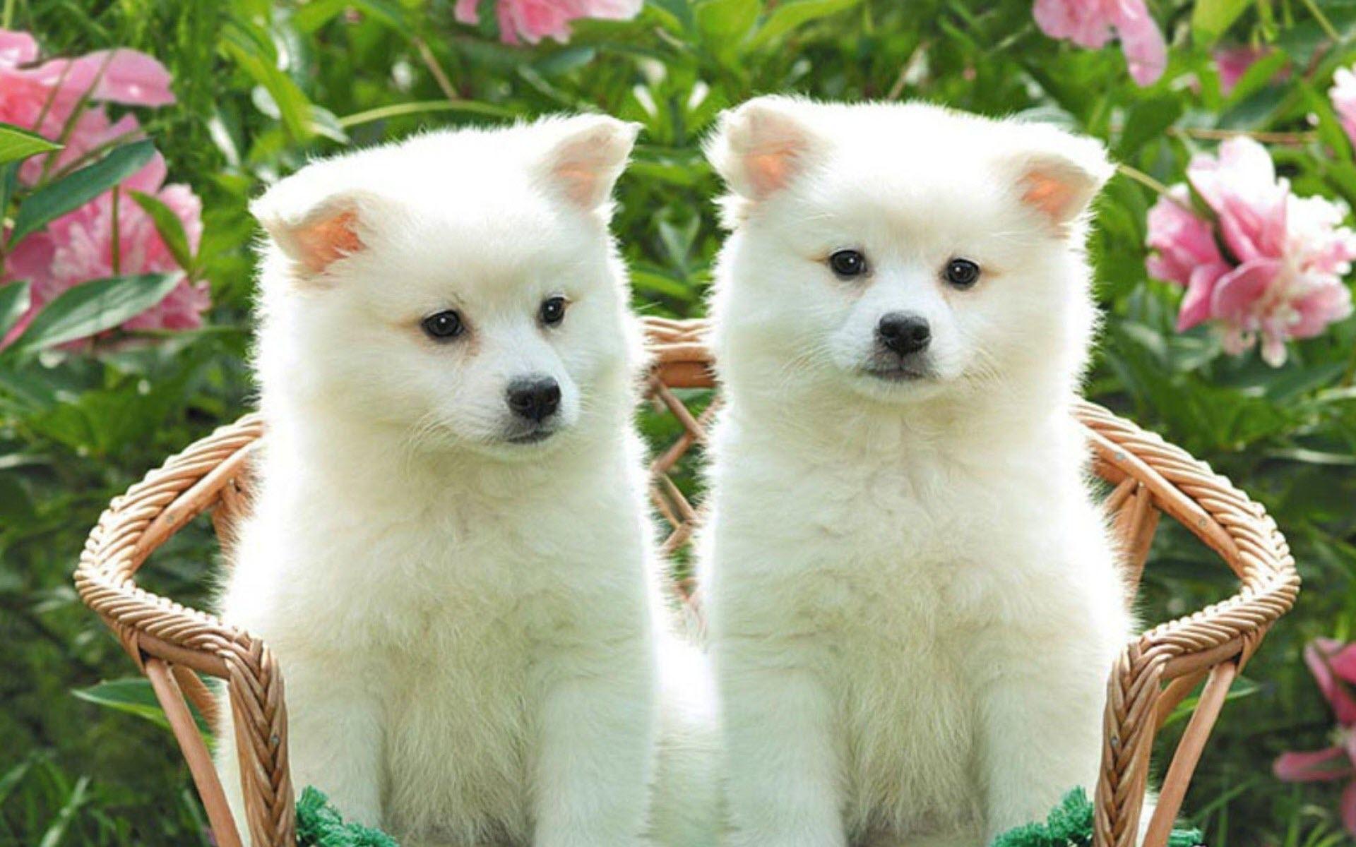 Hình nền hai chú chó đáng yêu ngộ nghĩnh