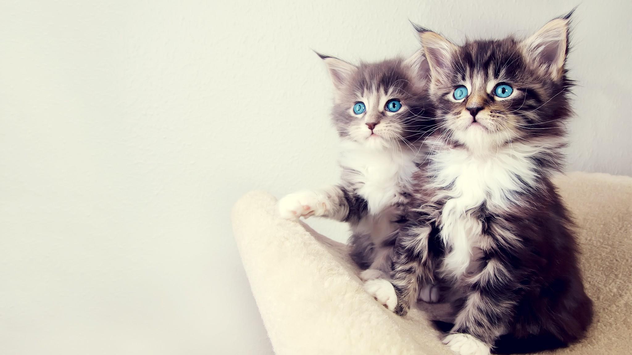Hình nền hai chú mèo con đáng yêu