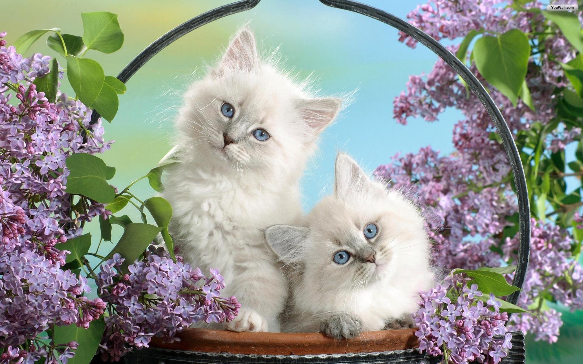 Hình nền hai chú mèo con dễ thương nhất