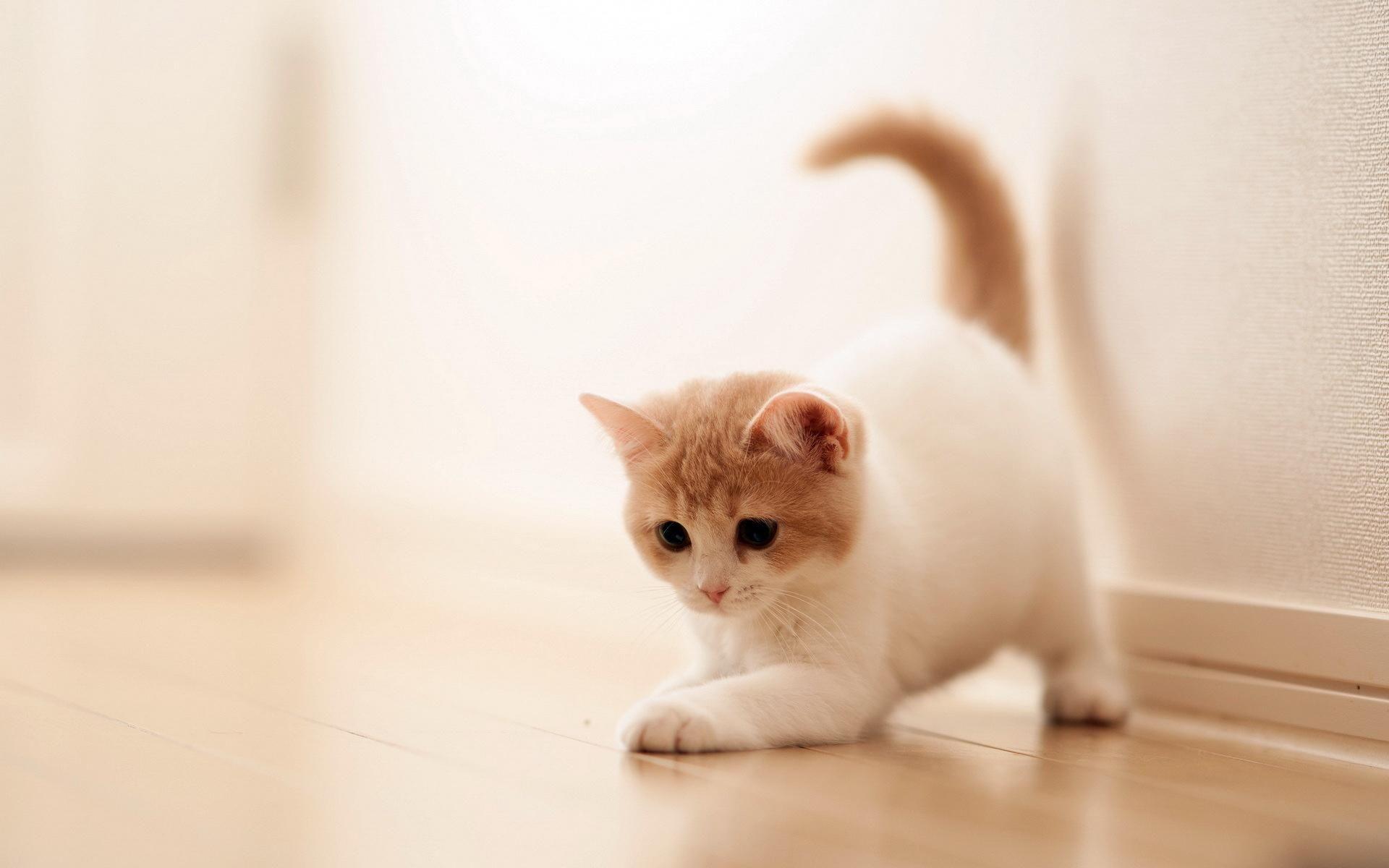 Hình nền mèo con chơi đùa đáng yêu