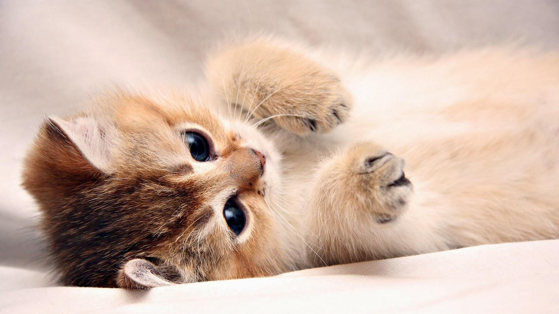 Hình nền mèo con dễ thương (2)
