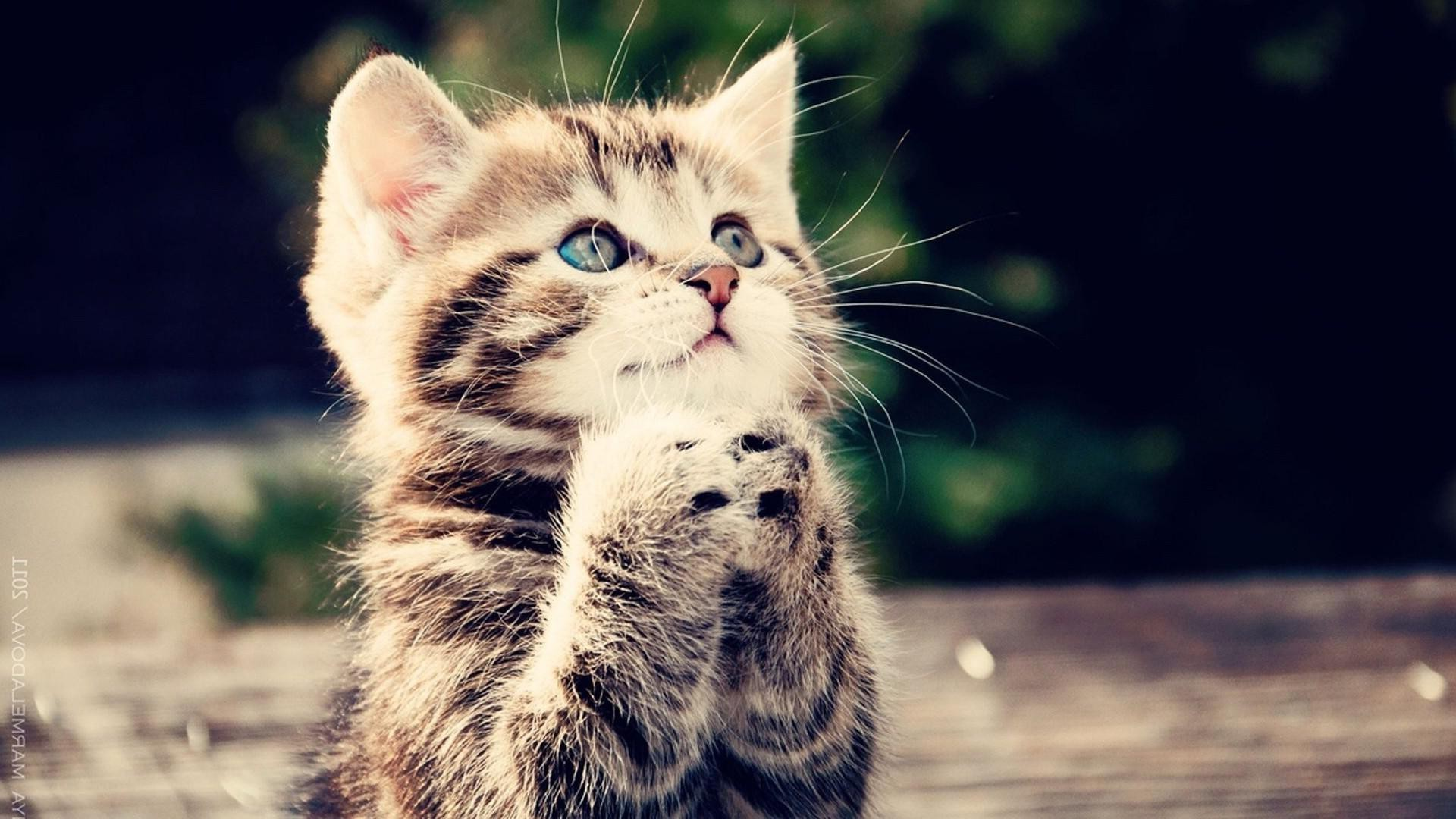 Hình nền mèo con dễ thương