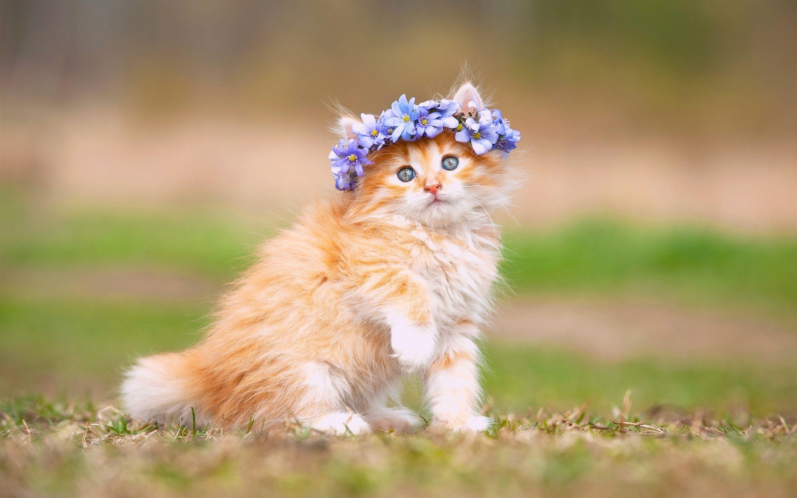 Hình nền mèo con kute
