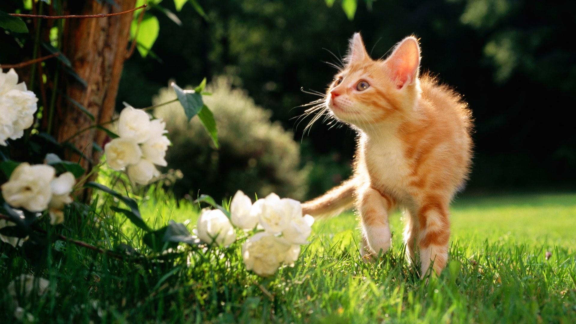 Hình nền mèo đẹp