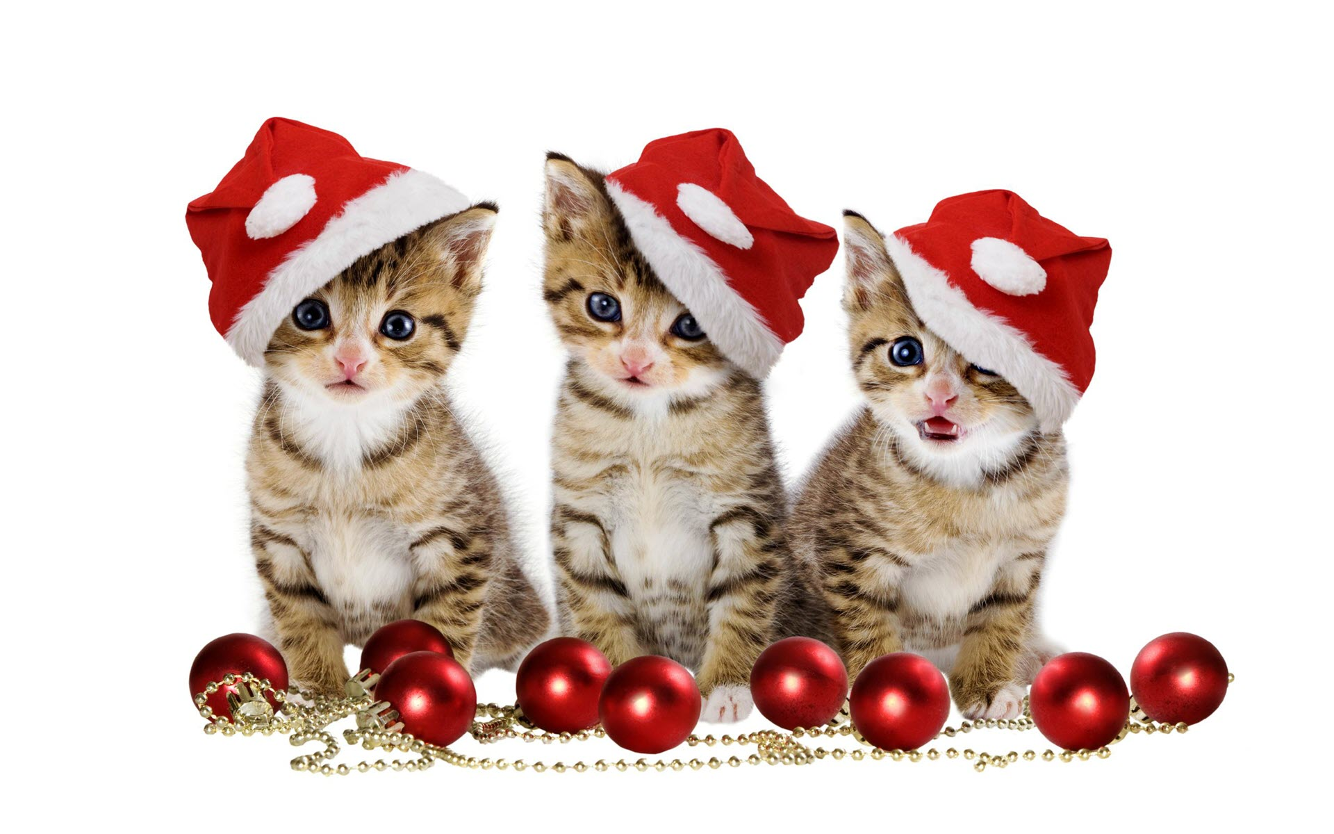 Hình nền những chú mèo trong ngày giáng sinh đẹp