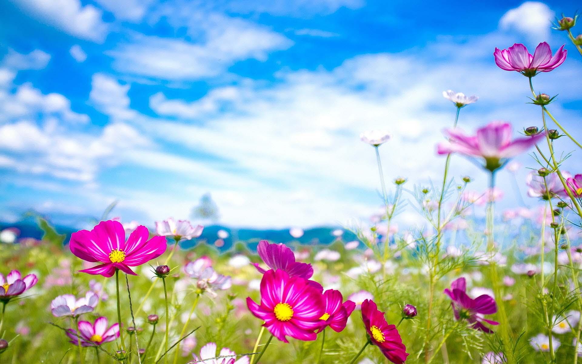 Ảnh nền thế giới hoa đẹp