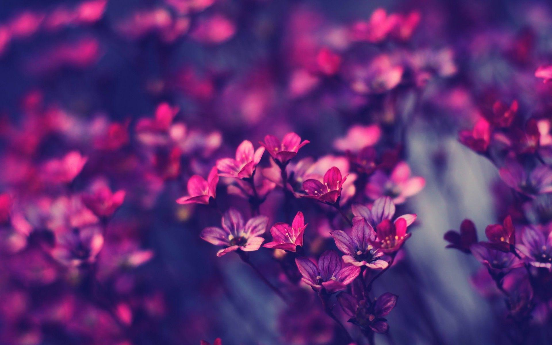 Ảnh wallpaper đẹp về hoa
