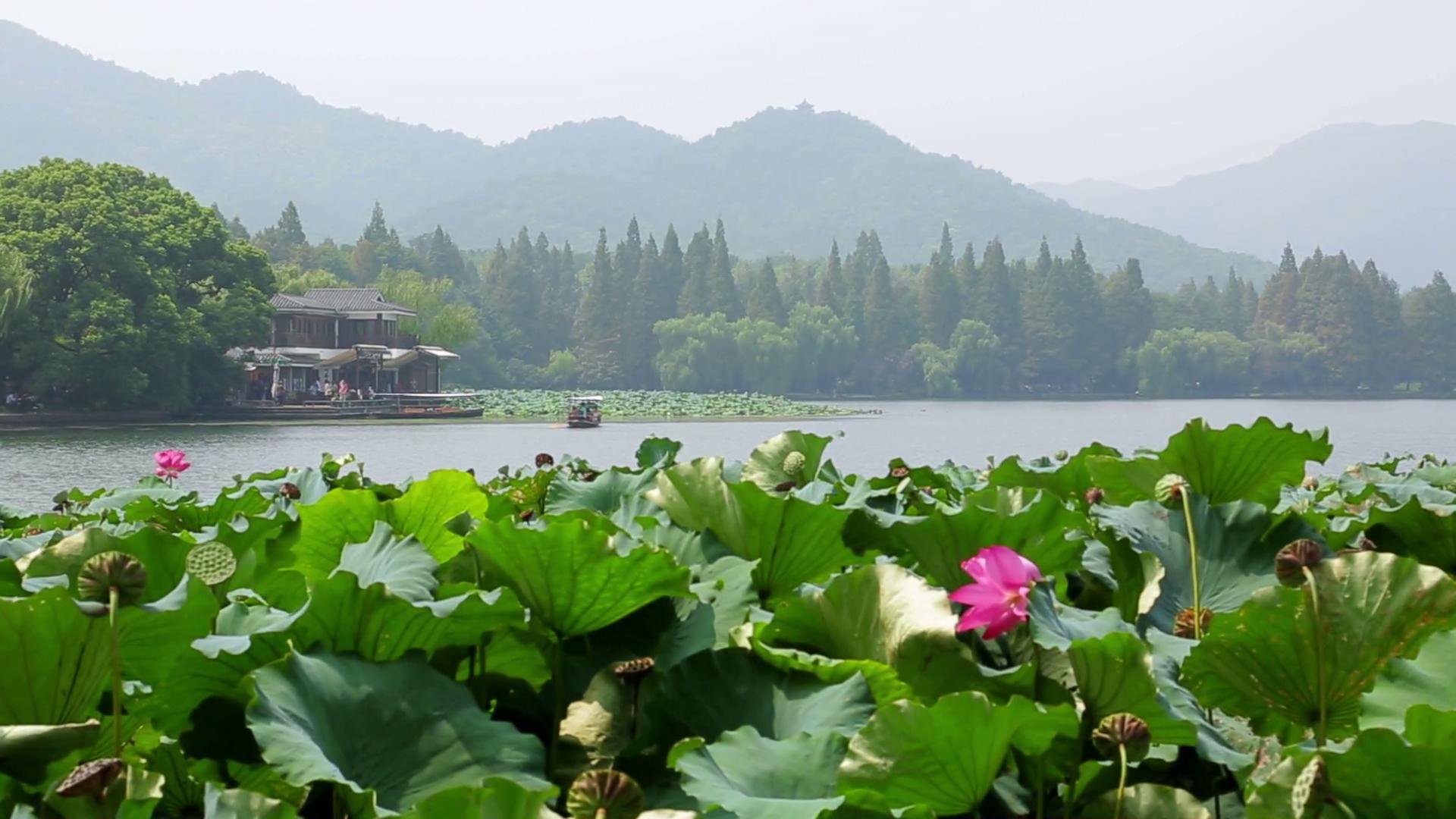 Hình ảnh đầm sen bên hồ đẹp