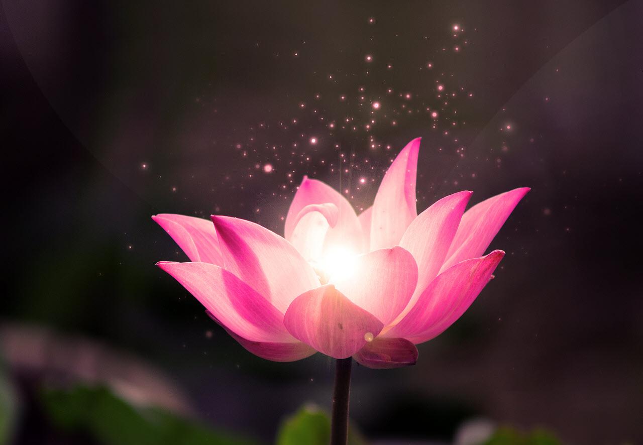 Hình ảnh hoa sen nghệ thuật đẹp