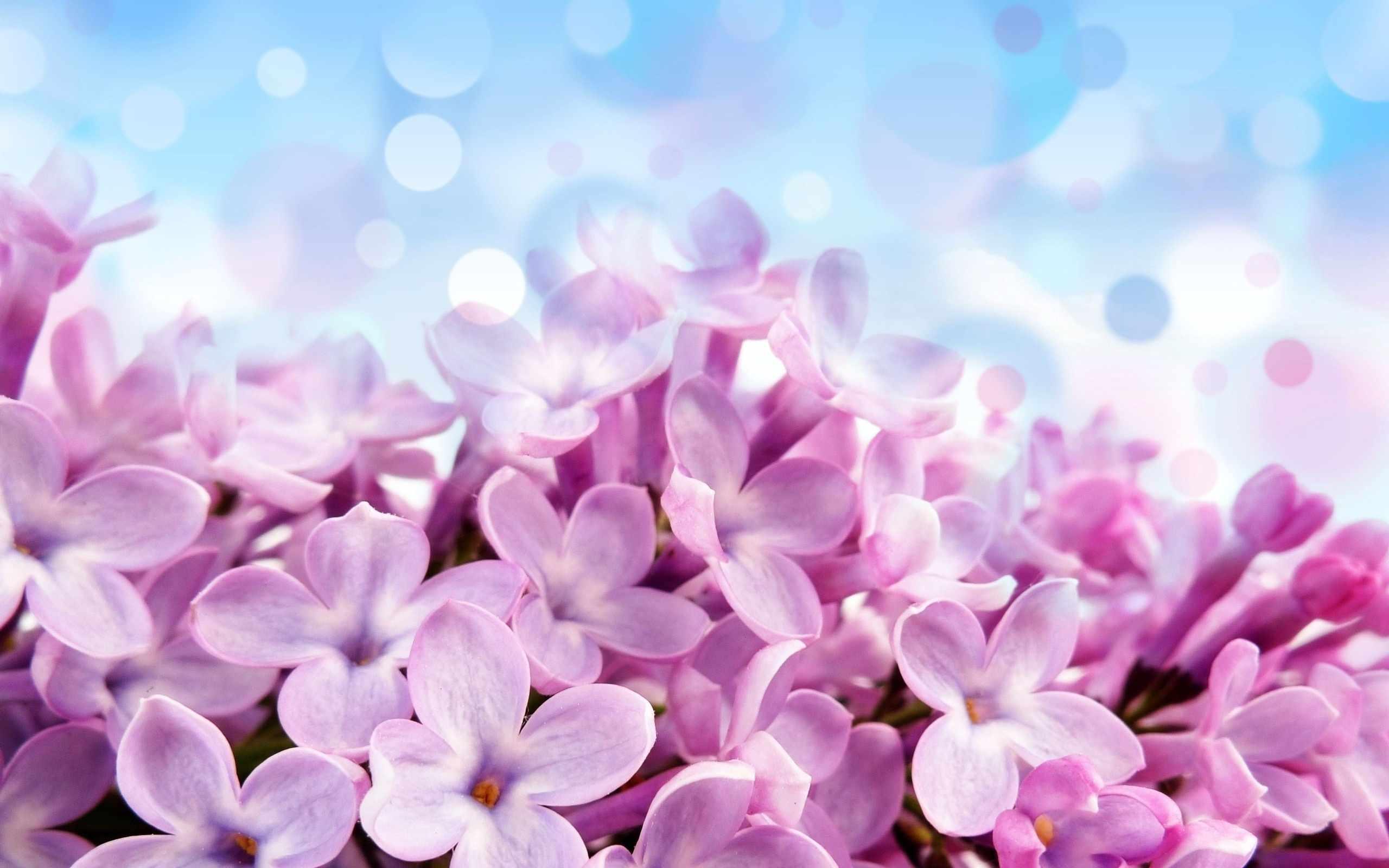 Hình nền đẹp về hoa