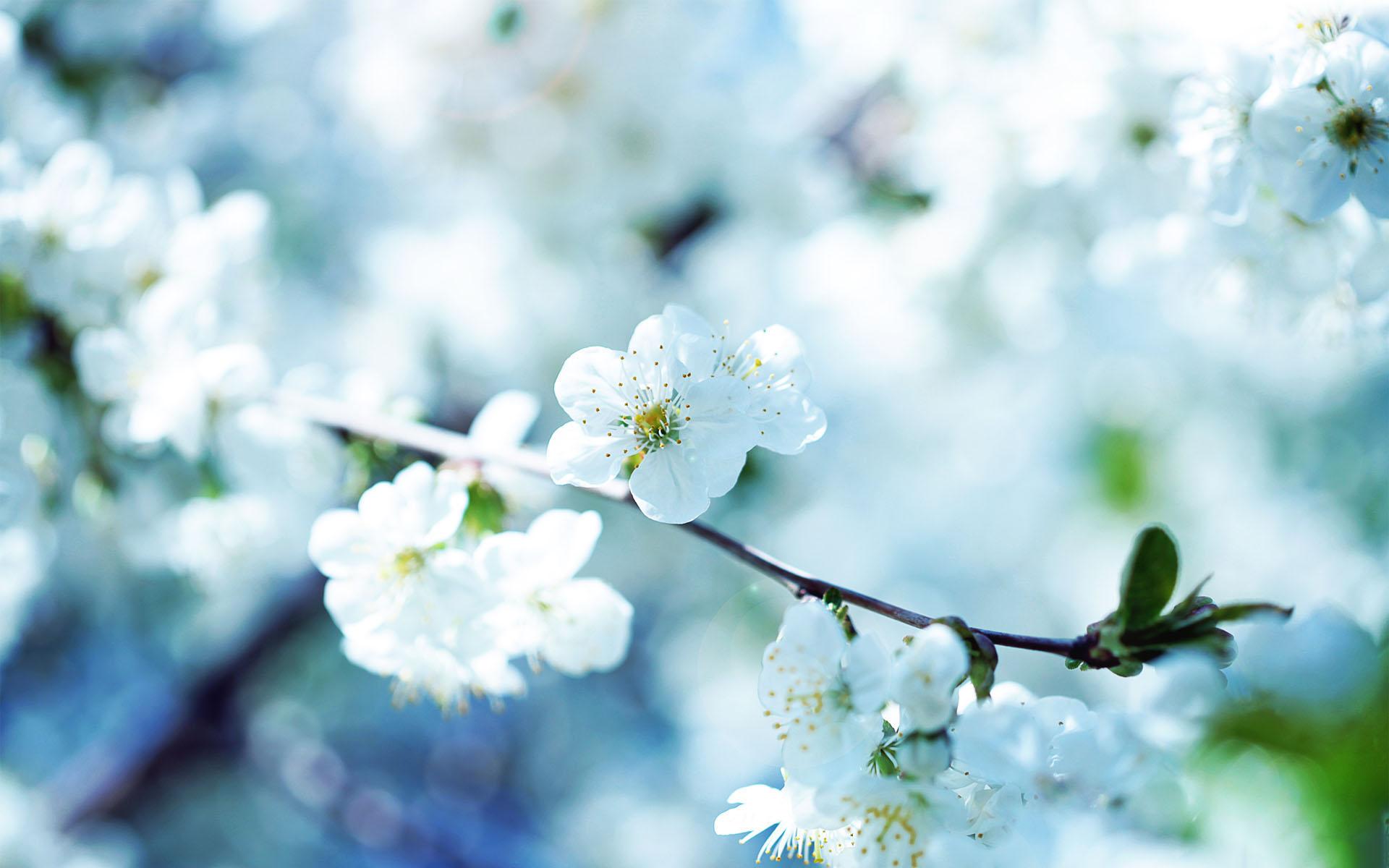Hình nền hoa cực đẹp
