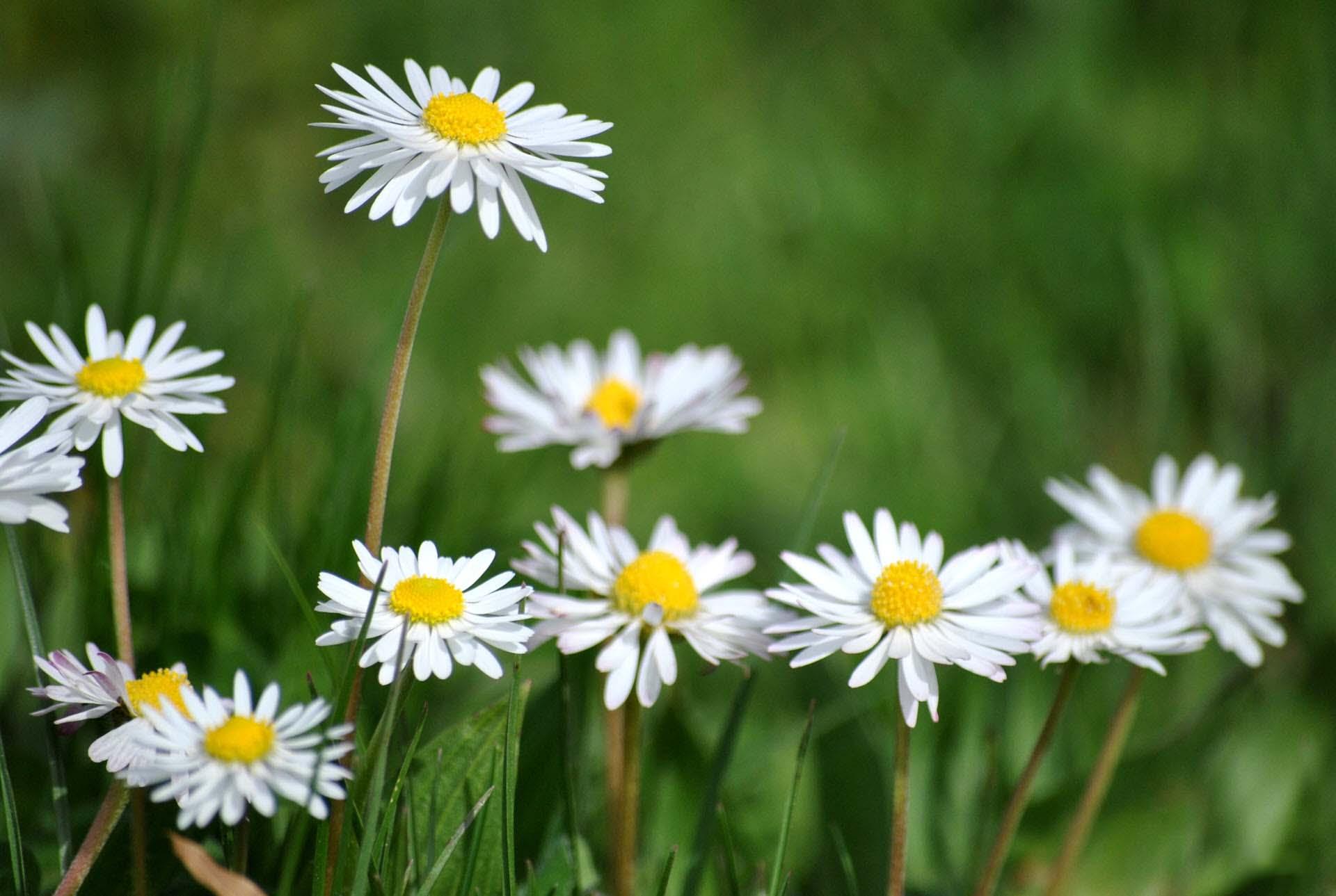 Hình nền hoa siêu đẹp