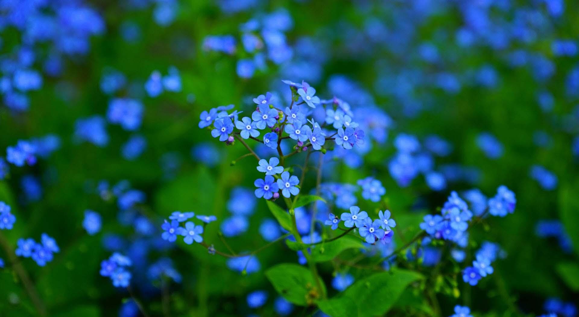 Hình nền về hoa đẹp