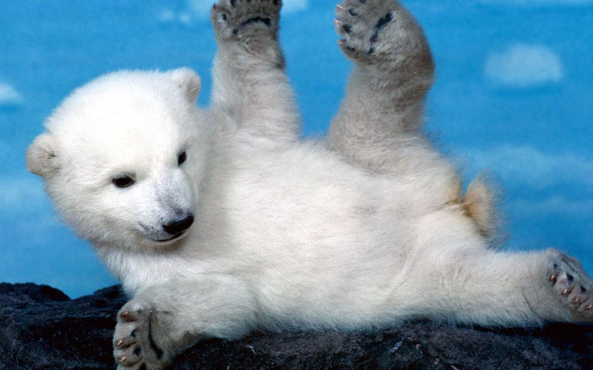 Ảnh nền chú gấu đáng yêu, dễ thương nhất