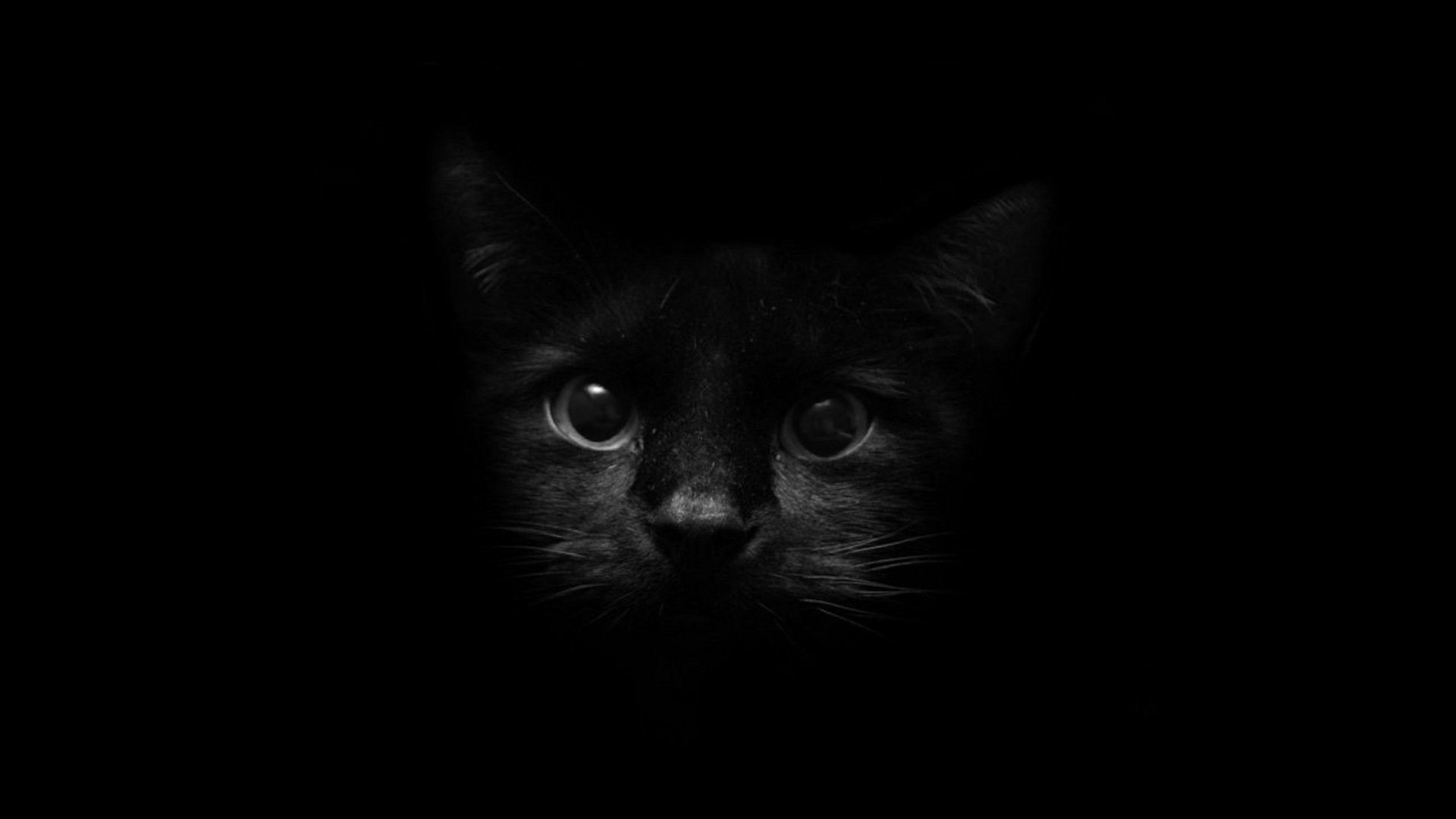 Ảnh nền mèo đen