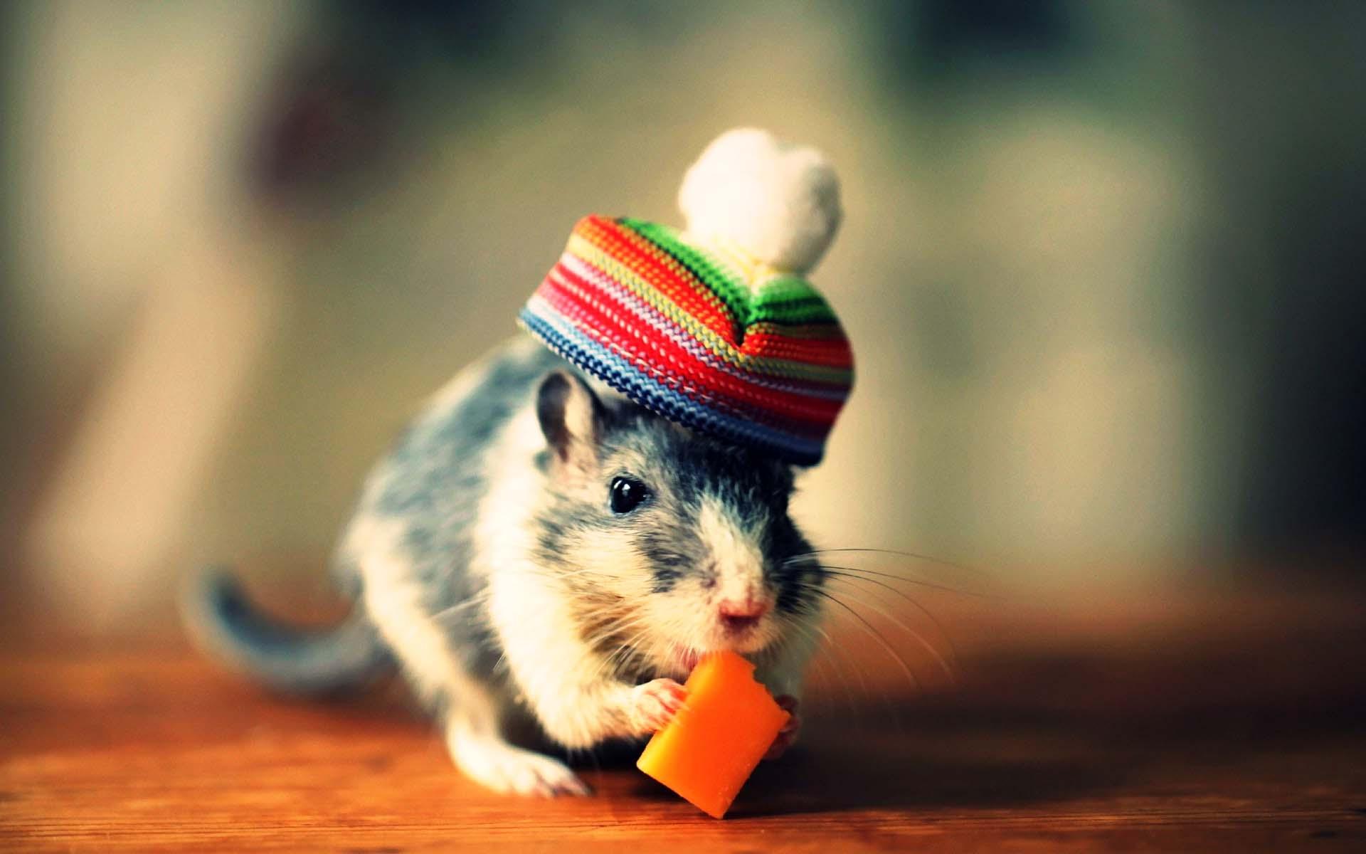Ảnh wallpaper chuột dễ thương