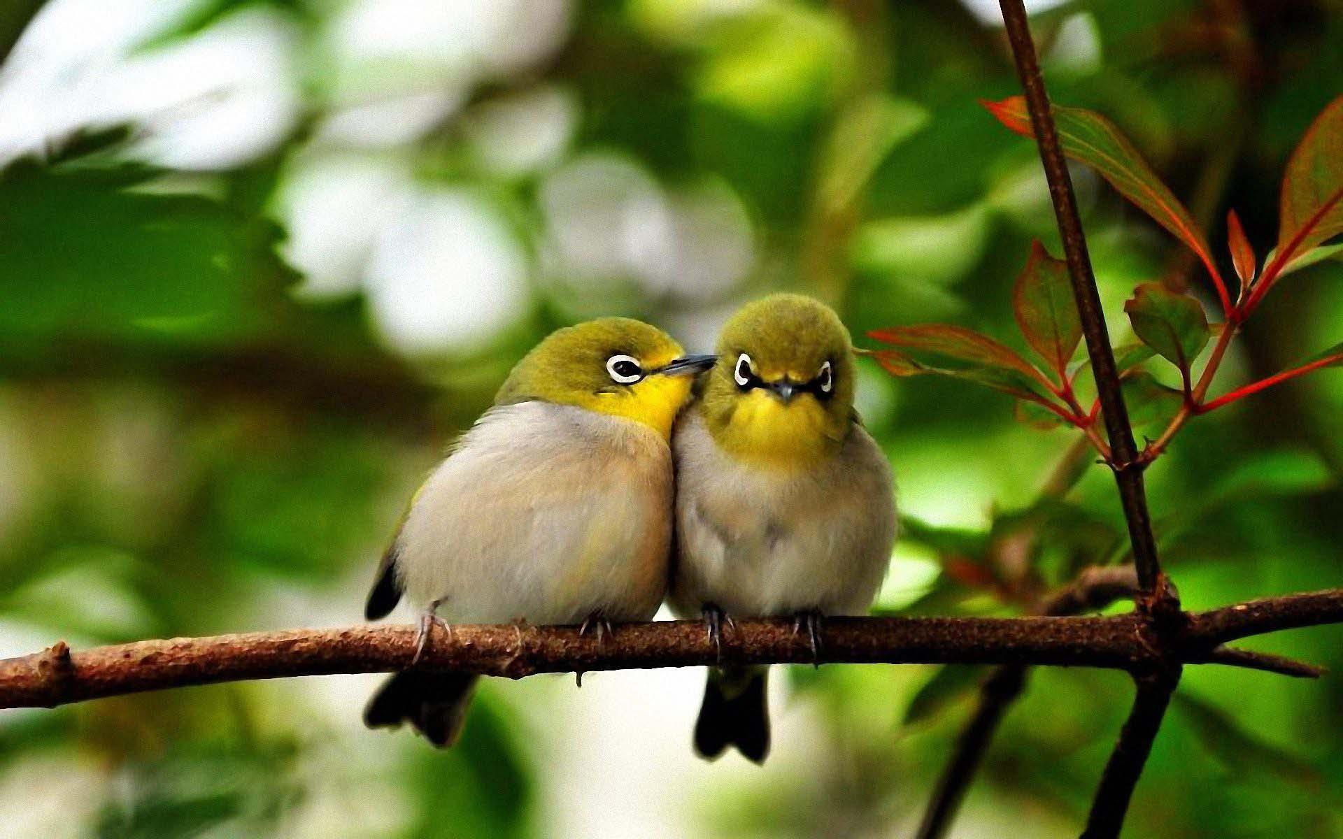 Hình nền đôi chim dễ thương nhất