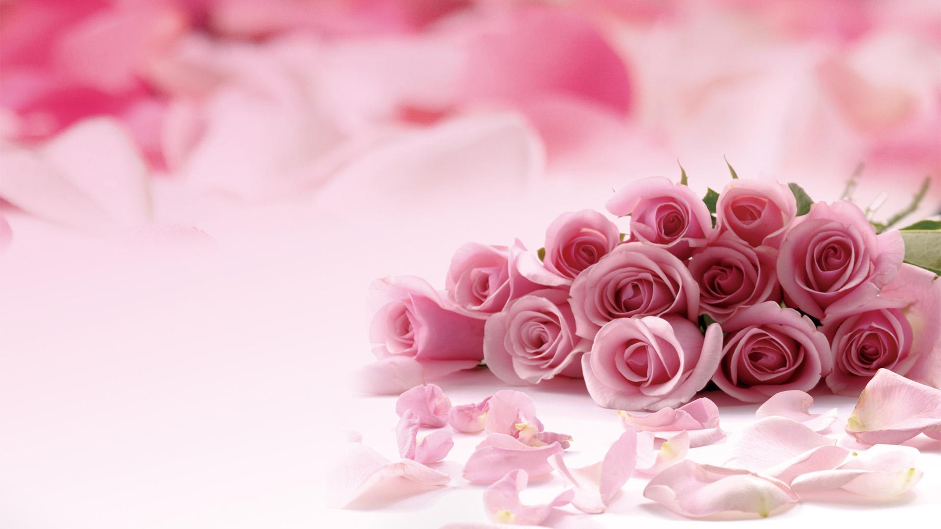 Hình nền hoa màu hồng đẹp
