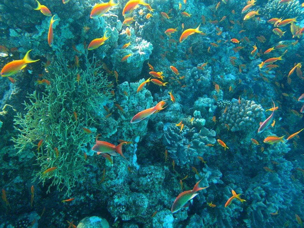 Hình ảnh sinh vật biển đẹp