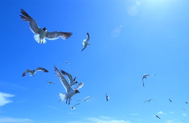 Ảnh đẹp chim bay lượn trên bầu trời