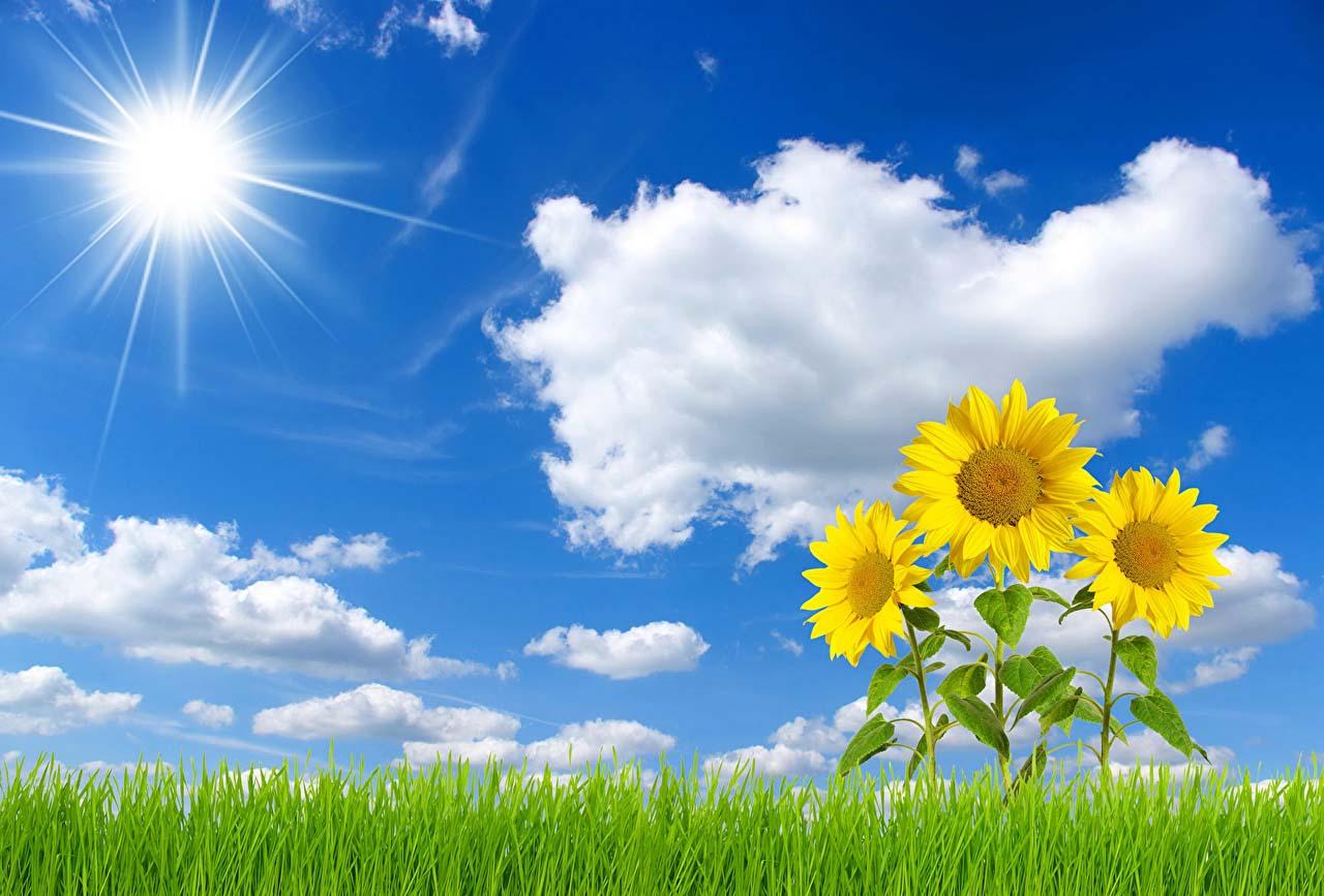 Ảnh đẹp hoa hướng dương và mặt trời