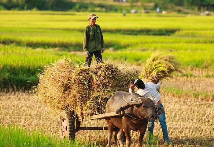 Ảnh đẹp làng quê Việt