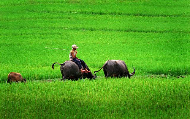 Ảnh làng quê Việt Nam đẹp