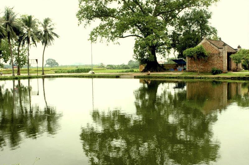 Hình ảnh ao làng quê xưa đẹp nhất