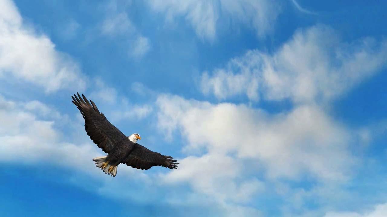 Hình ảnh đẹp chim đại bàng trên bầu trời xanh
