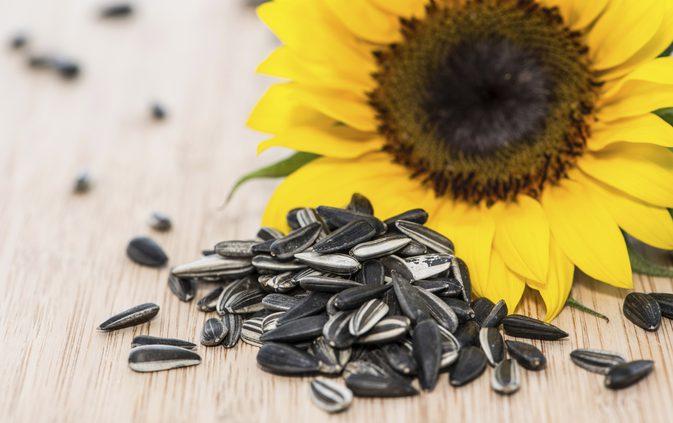 Hình ảnh đẹp hoa hướng dương và hạt