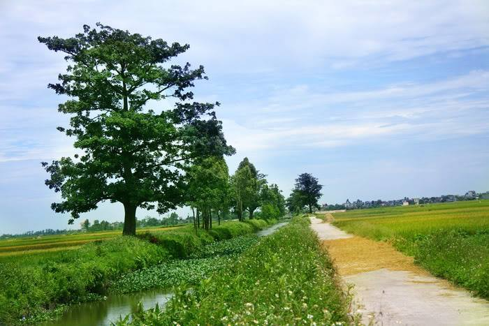 Hình ảnh đẹp và thanh bình về làng quê Việt Nam