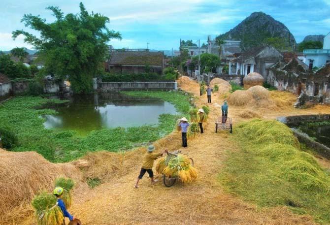 Hình ảnh làng quê mùa gặt