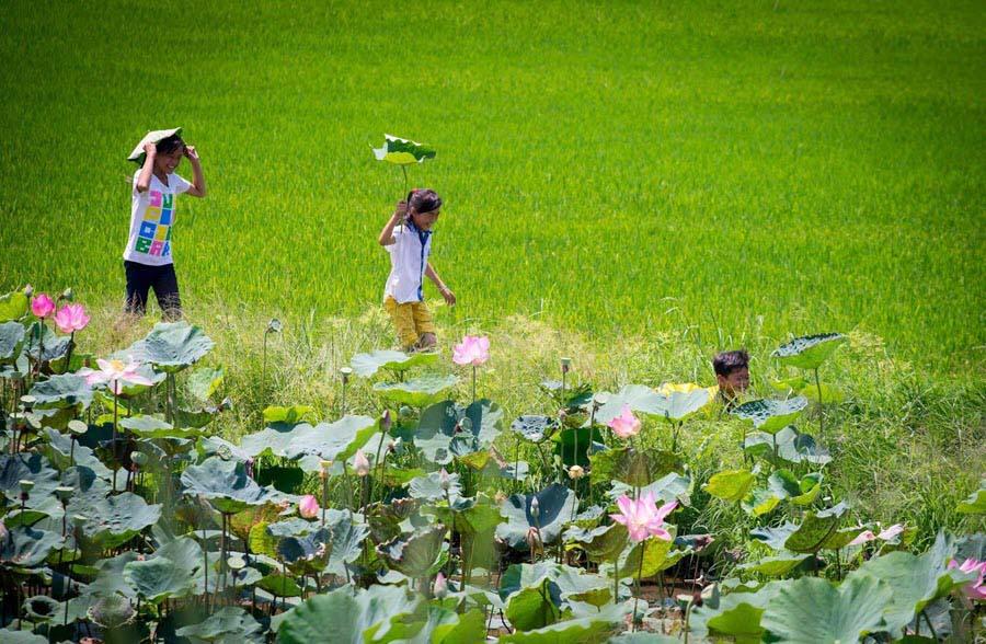 Hình ảnh làng quê Việt đẹp giản dị