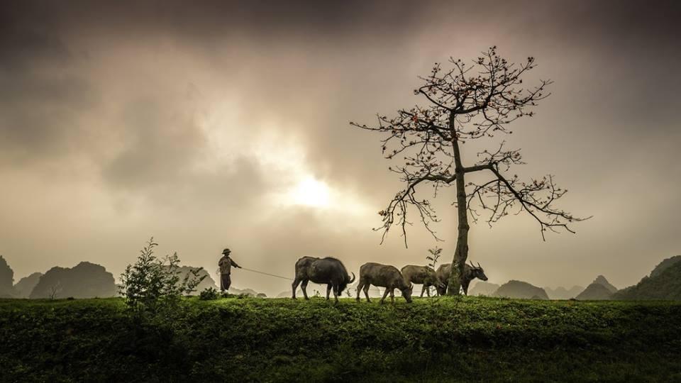 Hình ảnh làng quê Việt Nam
