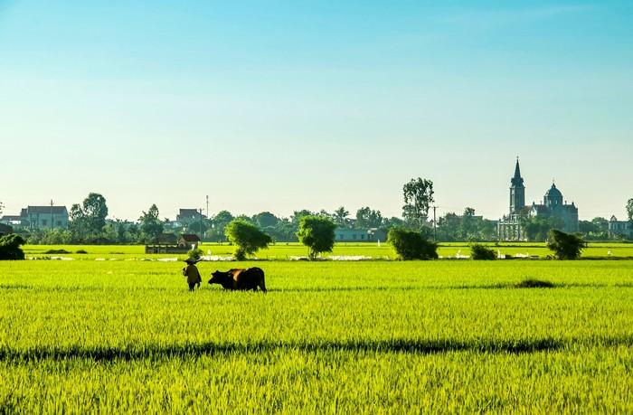 Hình ảnh làng quê Việt