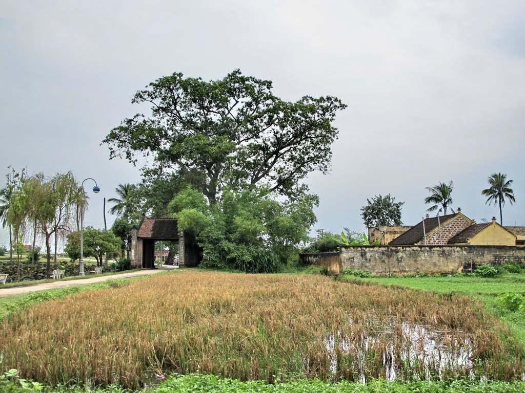 Những hình ảnh đẹp về làng quê Việt Nam
