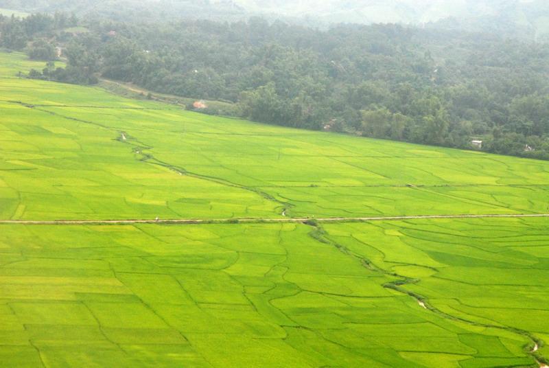 Ảnh đẹp cánh đồng lúa Điện Biên