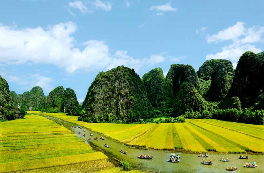 Ảnh đẹp cánh đồng lúa ở Ninh Bình